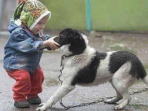 Сонник собака кусает ребенка фото