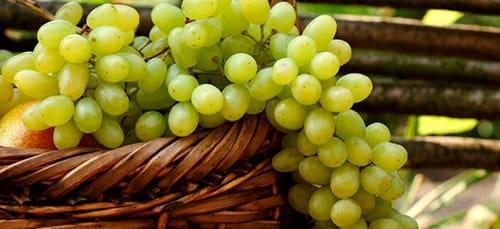 сонник зеленый виноград