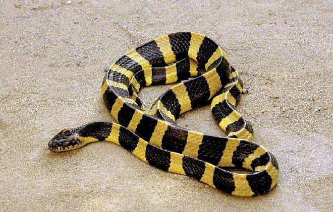 К чему снится укус змеи, что означает цвет змеи и место змеиного укуса – подробное толкование сна