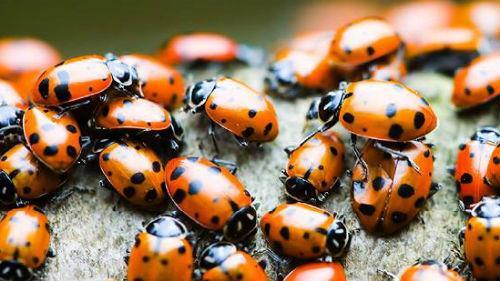к чему снится много насекомых