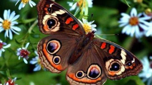 видеть красивую бабочку