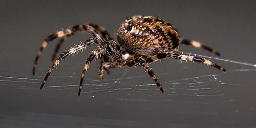 к чему снится что паук нападает