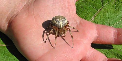 паук нападает во сне