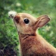 К чему снятся кролики?