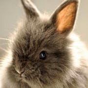 К чему снится много кроликов?