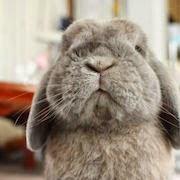 к чему снится серый кролик?