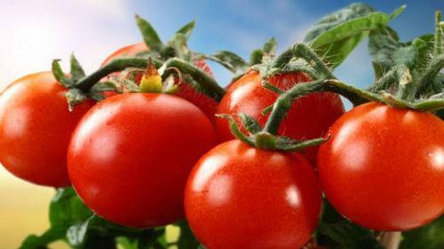 помидоры на грядке во сне