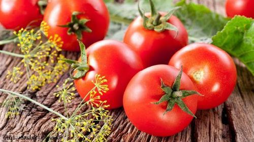 выращивать помидоры