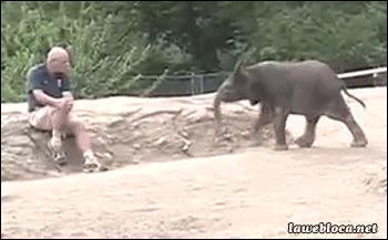 приснился слоненок