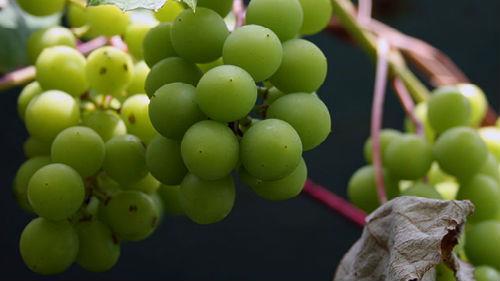 к чему снится зеленый виноград