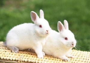 Снятся кролики