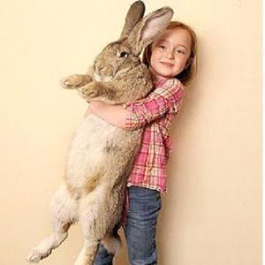 Кролик в подарок