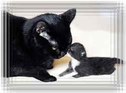 Фото кошачьей семьи