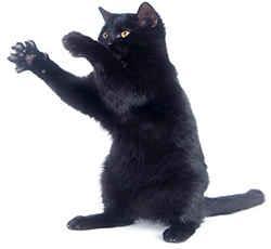 Злая черная кошка