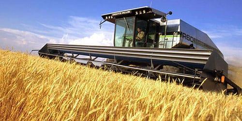 к чему снится пшеница