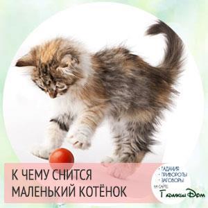 к чему снится котенок женщине
