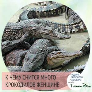 к чему снится маленький крокодил женщине