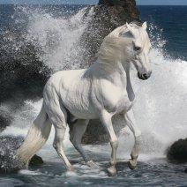 Приснилась белая лошадь: чего ждать?