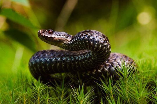 что значит увидеть во сне змею