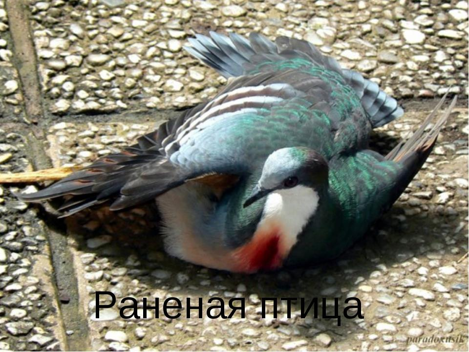 Фото К чему снится раненая птица с кровью