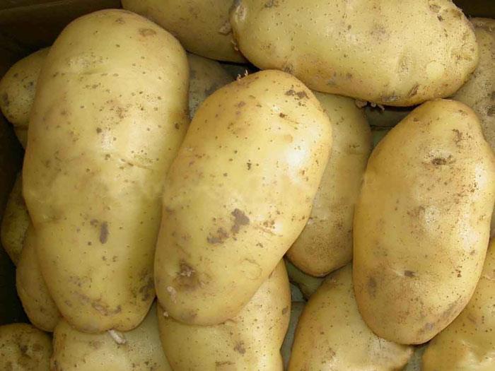 Сонник: к чему снится картошка (картофель)