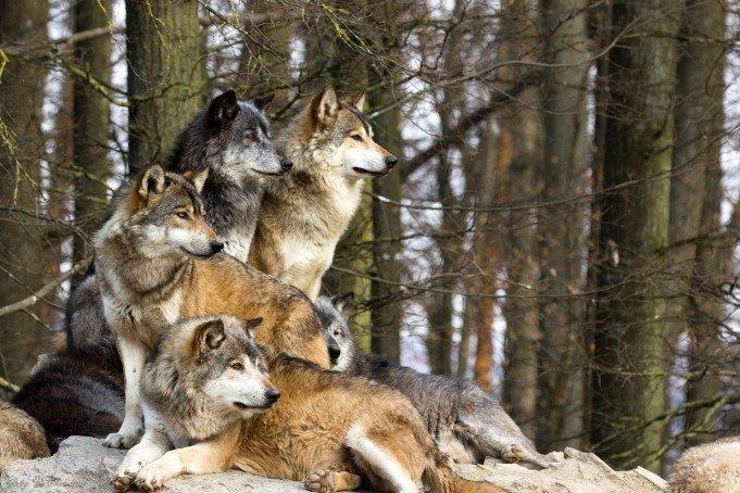 К чему снятся нападающие звери фото