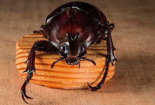 Фото К чему снятся жуки и червяки