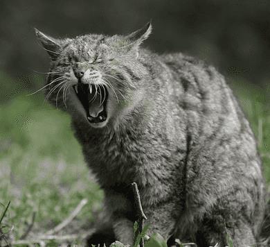Если во сне вы увидели, что на вас напала и исцарапала кошка - будьте готовы к сложностям и проблемам. Возможно, у вас есть недоброжелатели или попросту люди, которые к вам плохо относятся. Возможно, в ближайшем будущем вам следует ждать от них неприятностей.