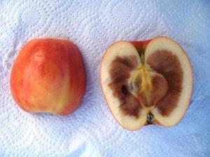 Гнилое внутри яблоко