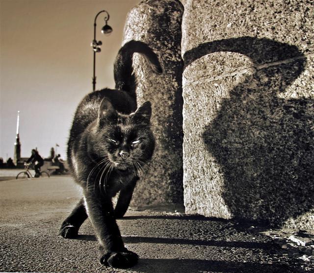 К чему снятся дикие кошки женщине