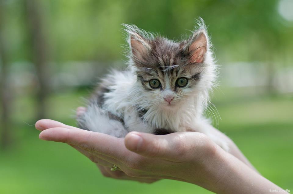 Сонник убить кота своими руками