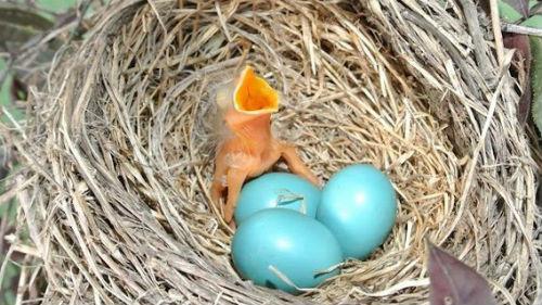 птенец вылупившейся из яйца
