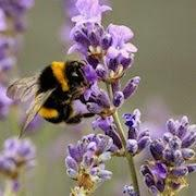 К чему снится укус пчелы?