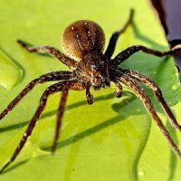 к чему снится паук большой мохнатый