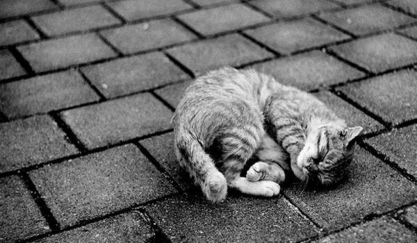 умирающий котенок