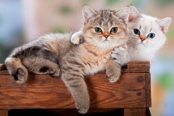 приснилось несколько котят