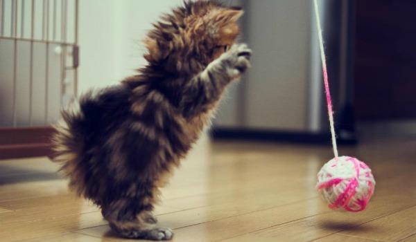 игры с котёнком