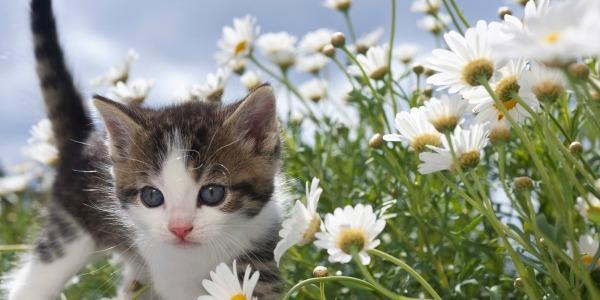 приснился котенок