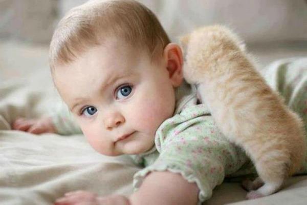 котята с детками
