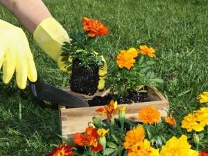 Сажать цветы – к любви