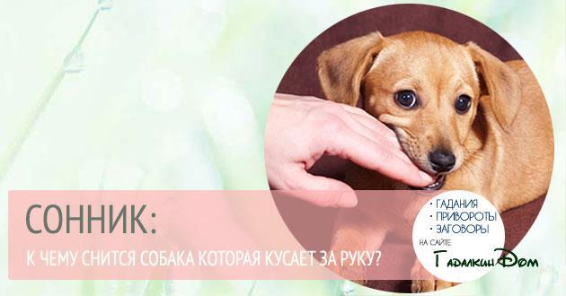 Розовая собака сонник фото