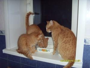 к чему снится стая рыжих котов