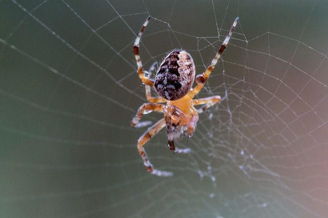 К чему снится паук парню фото