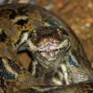 Снится говорящая змея фото