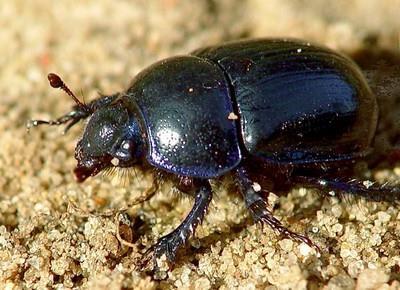 Фото К чему снятся черные жуки дома