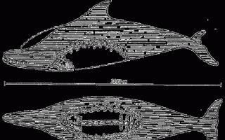 К чему снится морская змея фото