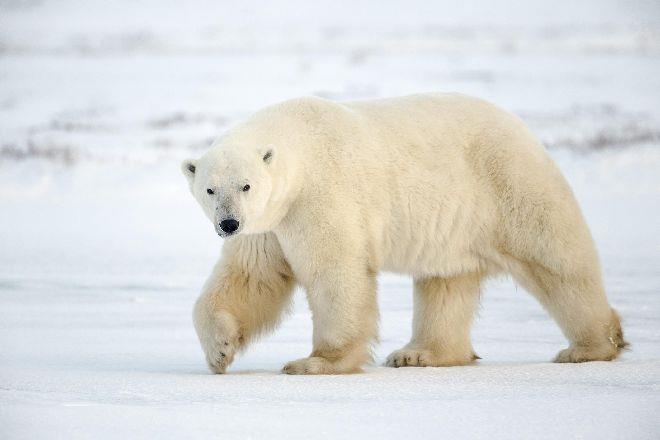 К чему снится медведь, который бежит за тобой, нападает, что означает прятаться от медведя - подробное толкование сна