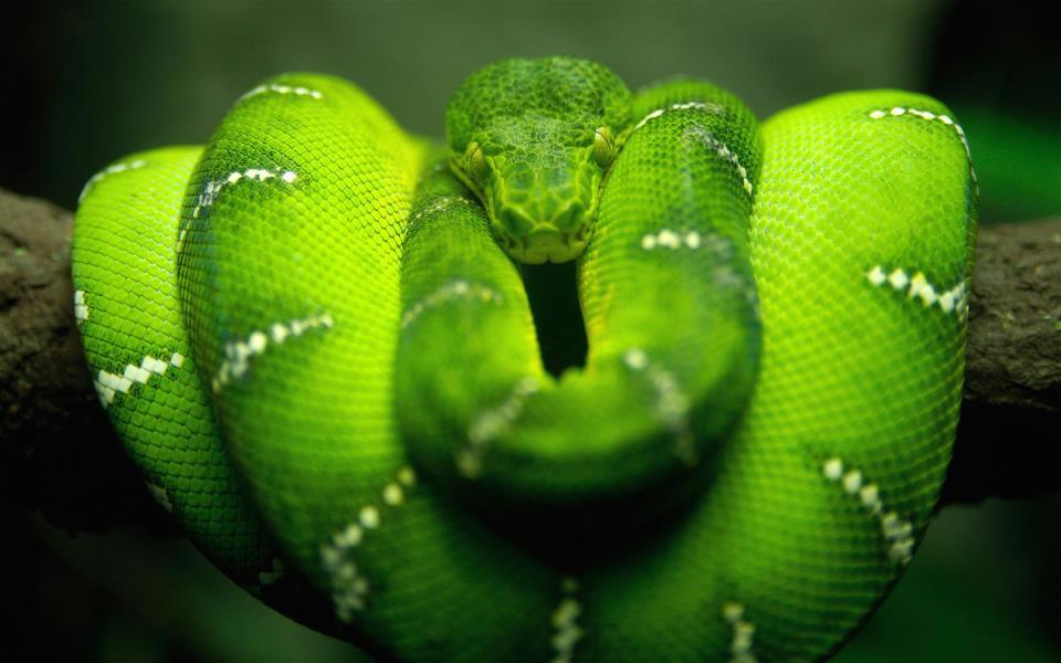 К чему снится добрая змея женщине фото