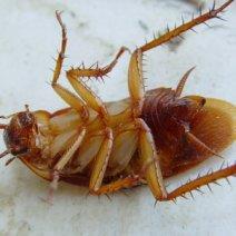 К чему снится убивать тараканов: толкование образов