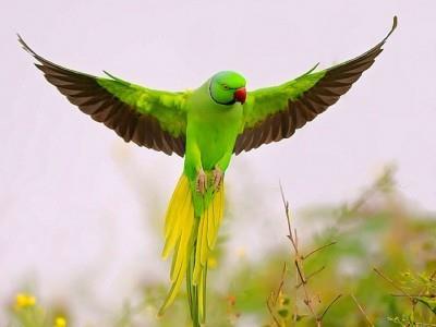 Фото К чему снится зеленый попугай